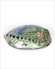 Picture of GREEN ABALONE SHELL