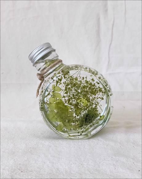 Picture of CIRCLE GREEN EKKI PLANT