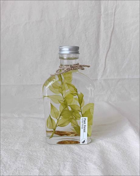 Picture of PENTAGON ADIANTUM RADDIANUM PLANT