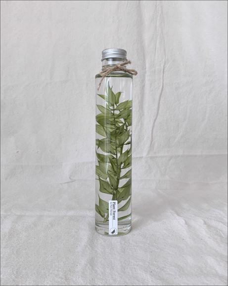 Picture of DEEP GREEN ADIANTUM RADDIANUM PLANT